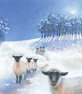 The Winter Sheep Card