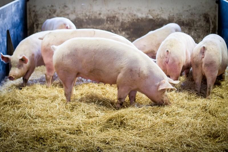 charcuterie-chazal-porc
