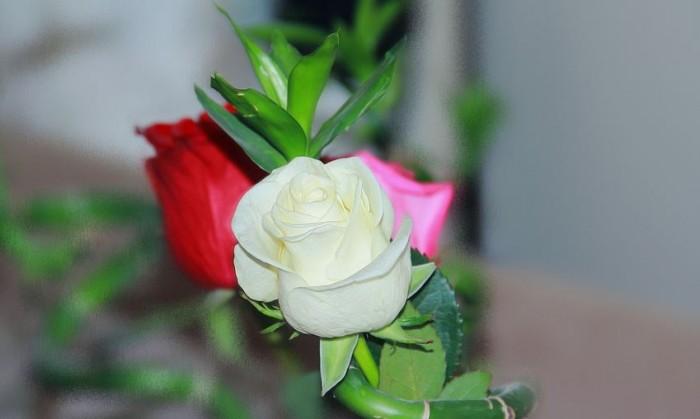 Download 830 Gambar Bunga Mawar Yang Paling Indah Gratis Terbaik