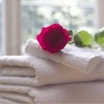 50+ Gambar Bunga Mawar Tercantik di Dunia (Warna Putih, Ungu, Pink, Hitam dan Hijau)