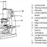 √15 Bagian Bagian Mikroskop dan Fungsinya Beserta Gambarnya, Terlengkap!