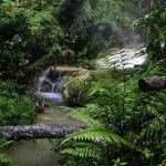 SUMBER DAYA ALAM : Pengertian, Macam Macam & Contoh Kekayaan Alam Indonesia