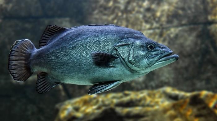Jenis Hewan Avertebrata Terdiri Dari Hewan Vertebrata Pengertian Ciri Ciri Gambar Contoh Hewan Vertebrata Salamadian