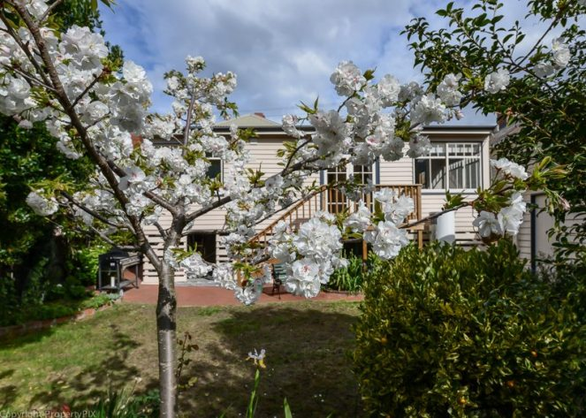 Spring blossom Cascade South Hobart Salamanca Realty Real estate Tasmania