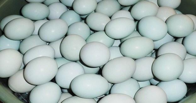 Pengawetan Telur dengan Cara Diasinkan
