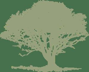 single-light-green-tree
