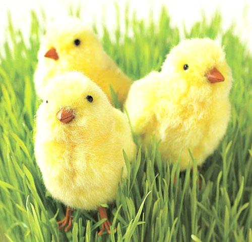 page-06-chicks