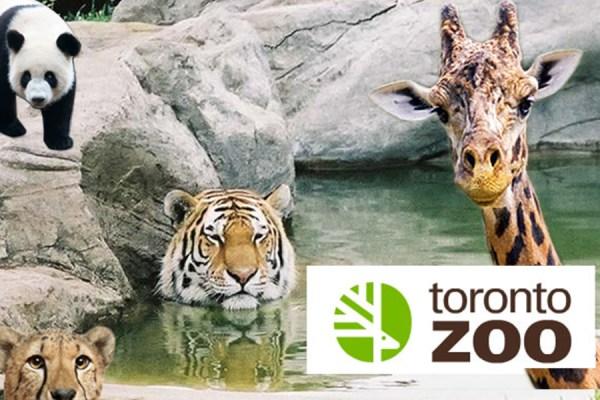 باغ وحش تورنتو از جمله زیباترین و وسیع ترین باغ وحش های آمریکای شمالی است.