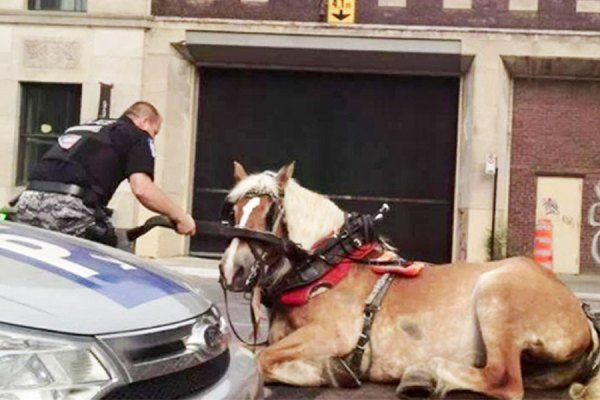 اسب پایش گیر کرد و بر زمین افتاد و برای دو ساعت در همان حال باقی ماند