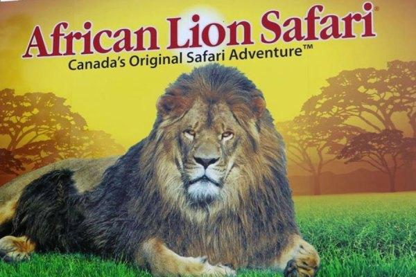 lionsafaribailey1