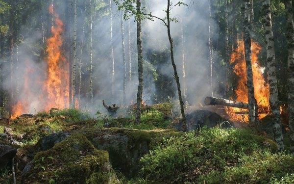 نیمی از آتش سوزی هایی که در انتاریو اتفاق می افتند، عامل انسانی دارند!