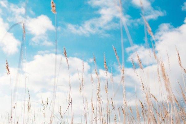 کمی باران باعث شده رمه داران از هم اکنون نگران کاه و یونجه در پاییز و زمستان برای دامهای خود باشند.