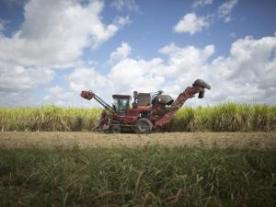 A sugarcane harvester. File photo: Alexandre Meneghini
