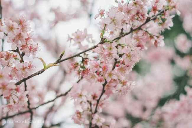 Festa-Cerejeira-14-18