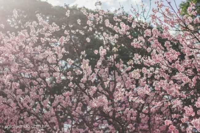 Festa-Cerejeira-14-5