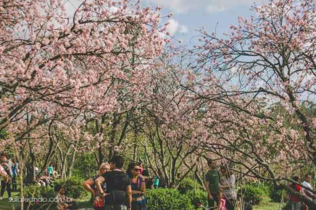 Festa-Cerejeira-14-7