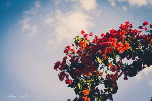 Amy-Wineflowers-18