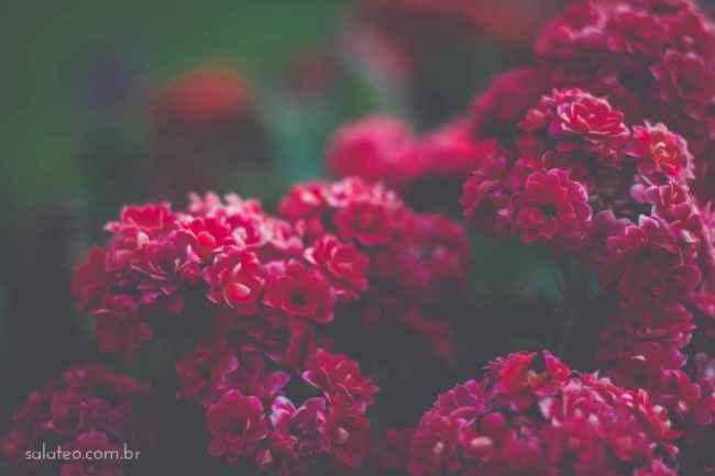 Amy-Wineflowers-24