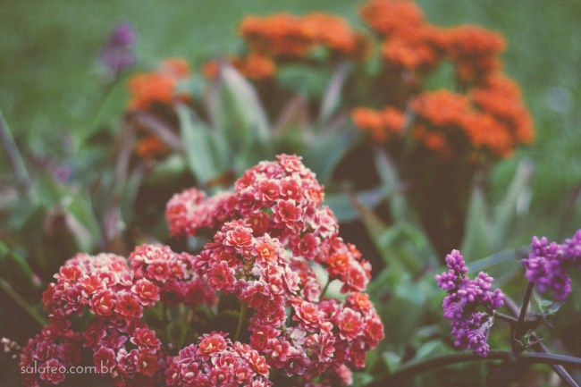 Amy-Wineflowers-25