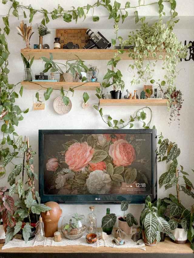 Como decorar com plantas pendentes