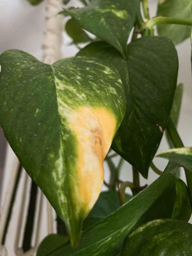 Como tratar problemas nas plantas?