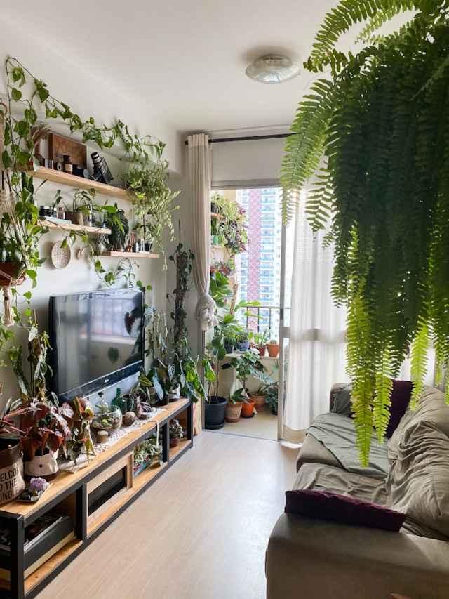 7 plantas para ter em apartamento