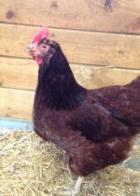 Ginger-Chicken.5924b8534807db5b3c93b567bbb7259d