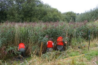 Clearing reeds