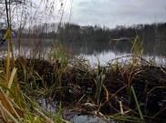 The willow groynes