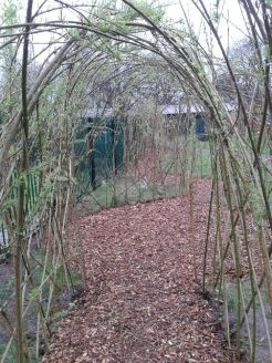 Completed willow arch and path