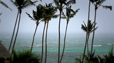 tropical-storm-palm-trees_7yz8faxl__d-1_std.original