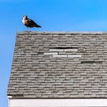 How to Notice a Failing Roof
