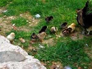 Little Chicks!