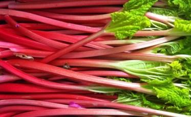 Rhubarb Stalks.