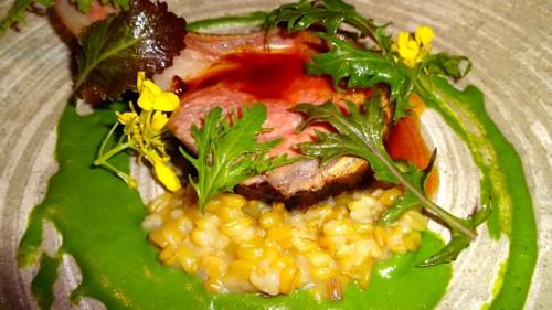 Close Up of the Lamb Chop.