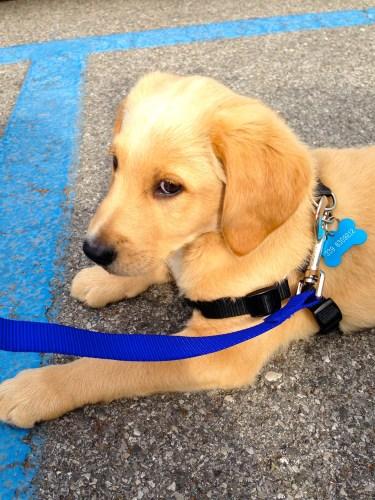 Cutest Little Puppy!