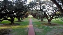The Double Row of Oak Trees.