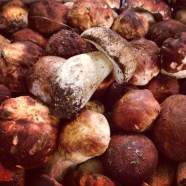 Beautiful Porcini Mushrooms.