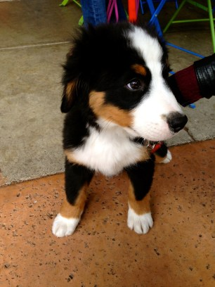 Cutest Puppy Ever.
