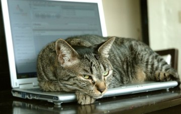 cat-on-laptop-640x405