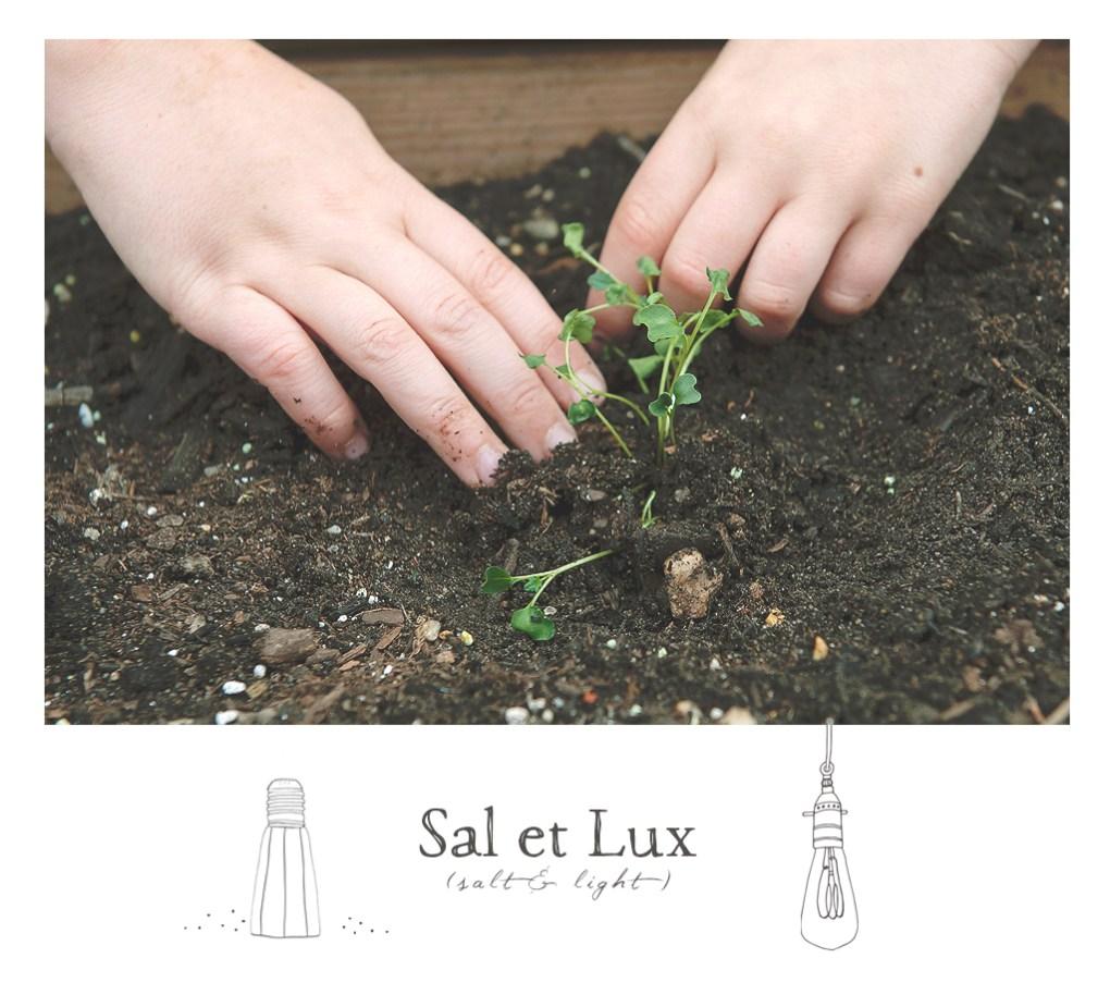 raised_bed_gardening_saletlux