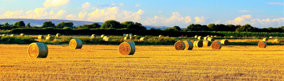 19) Jack Stansfield - Hay Bales on Irlam Moss