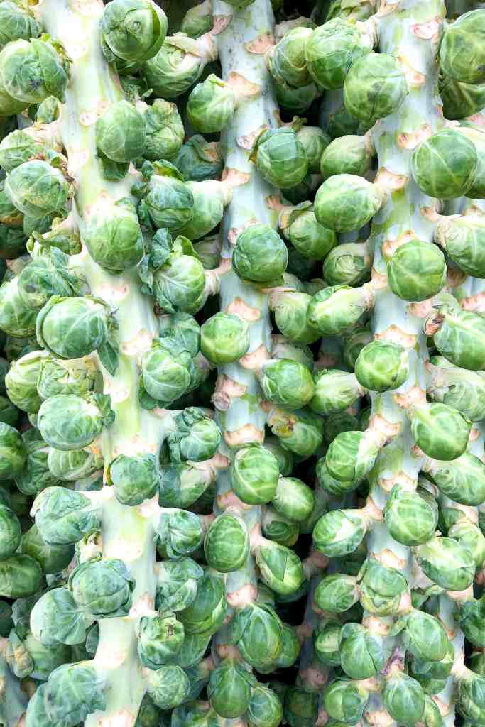 Several stocks of brussels sprouts.