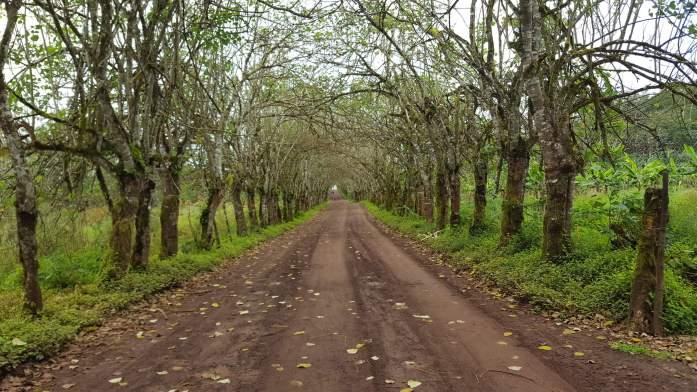 Entrada a la Reserva, parte alta de la Isla Santa Cruz