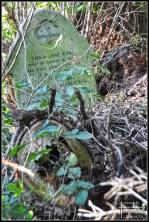 cementerio abney park londres 2011 (4)