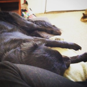 Five UX Lessons from my Dog