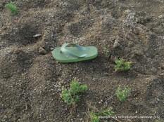 Sandal on the beach