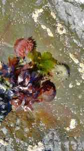 Amazing colours in a rockpool