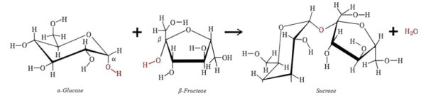 Carbohydrates Part 2 | Another biochem blog