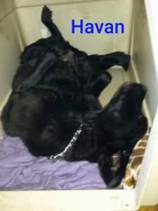 Havan in the Kennel